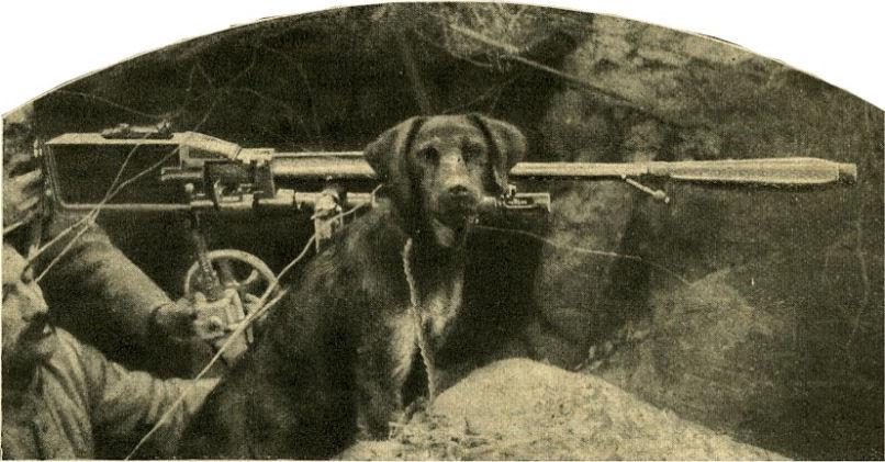 les chiens de Guerre  chiens007